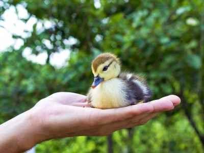 bird in hand